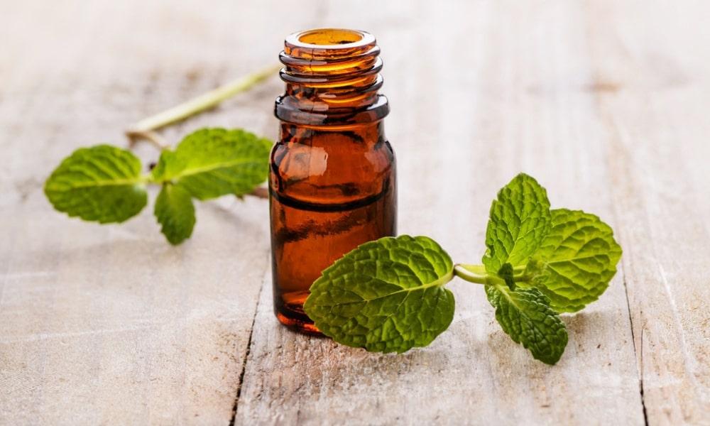 tinh dầu giúp giảm chứng đau nửa đầu hiệu quả